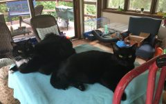 Rachel's cats Orville and Fern are relaxing on their bed.